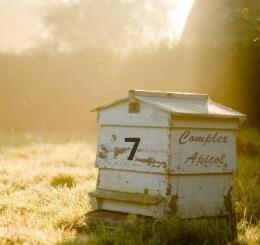 11-stup-cu-albine-ferma-rustica-walnuts-famr-marea-britanie