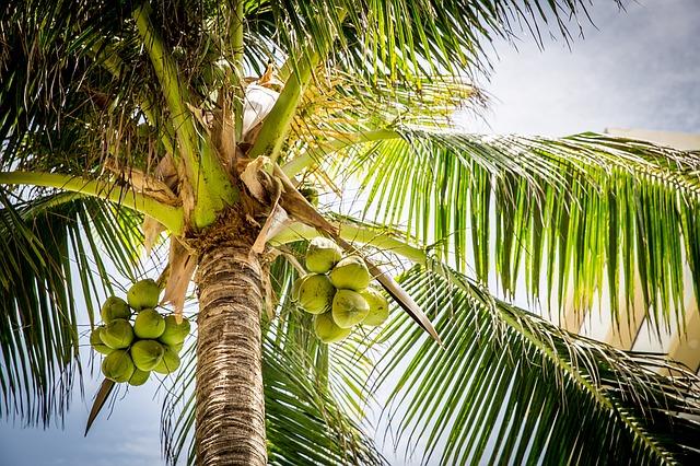 beach-1281680_640.jpg
