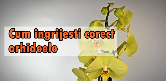 orchid-2015944_1920.jpg